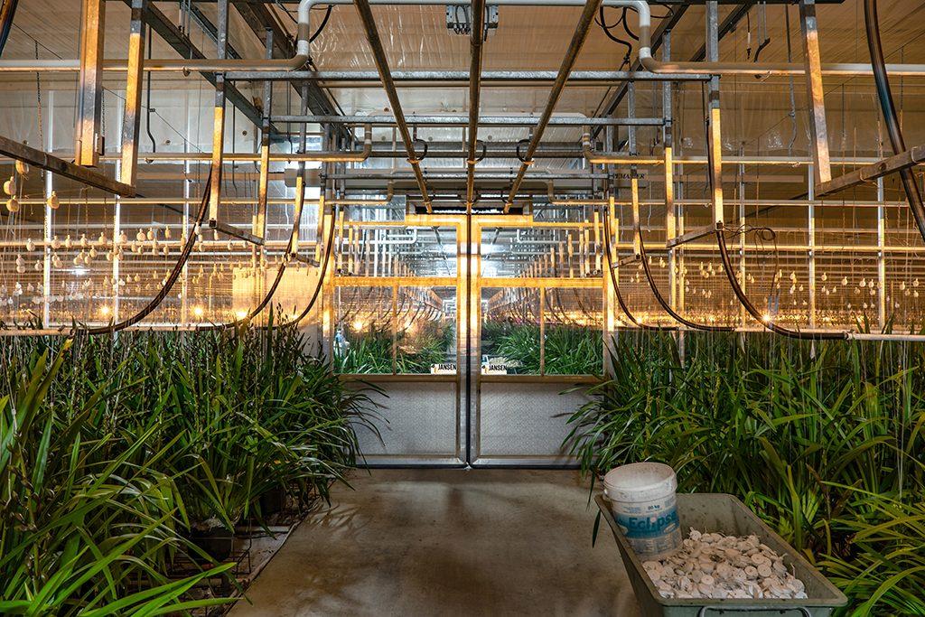 Jansen tuinbouwdeur