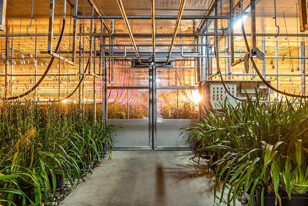 763 Jansen tuinbouwdeur 1024